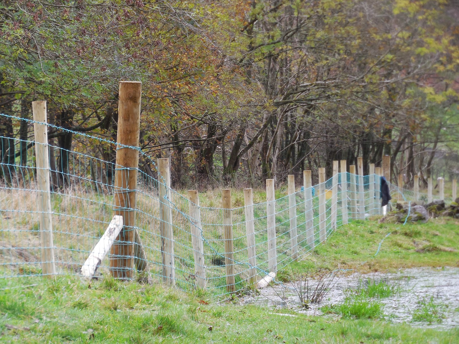 The Uneven Ground Proved Challenging In Places Left Foreground Bottom Plain Wire Stock Netting And Barbed Have Been Fully