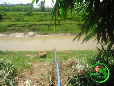 Menggunakan pompa air untuk mengairi tanaman mentimun kakek