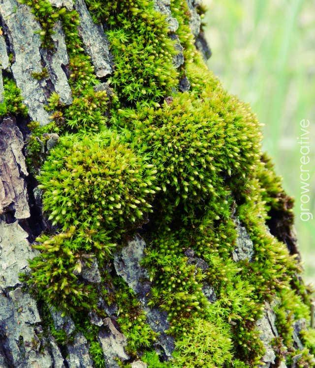 Green Moss in the Mountains: growcreative