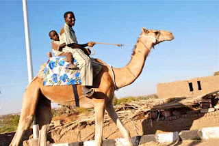 Loca Camel Transportation - Egypt