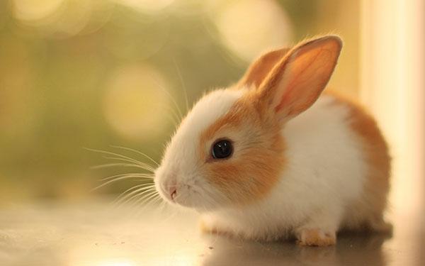 LightMax Blogger  Demo Fun Rabbit Facts for Kids
