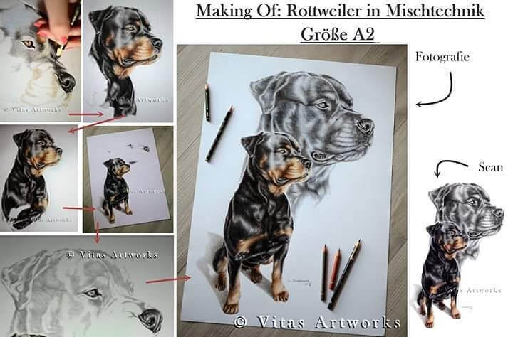 09-Rottweiler-Carolin-Behnke-www-designstack-co