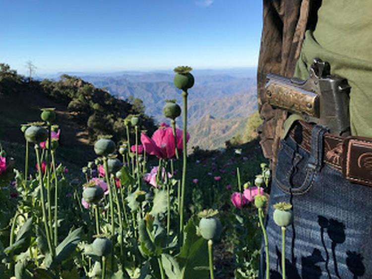 Así trabaja el Cártel de Sinaloa sin 'El Chapo': visita a un campo de amapola clandestino