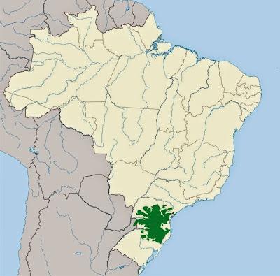 Floresta com araucárias, desmatamento da floresta com araucárias, araucárias, extinção da araucária, desmatamento ilegal, conservação da floresta com araucária, natureza, santa catarina, Paraná, extinção, árvores ameaçadas de extinção