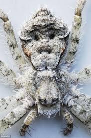 صورة عنكبوت حقيقي يحمل ملامح إنسان فى انجلترا