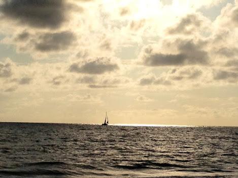 The Essential Beachcomber: Manasota Key Starter Kit