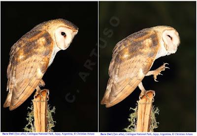 Christian Artuso: Birds, Wildlife - photo#31