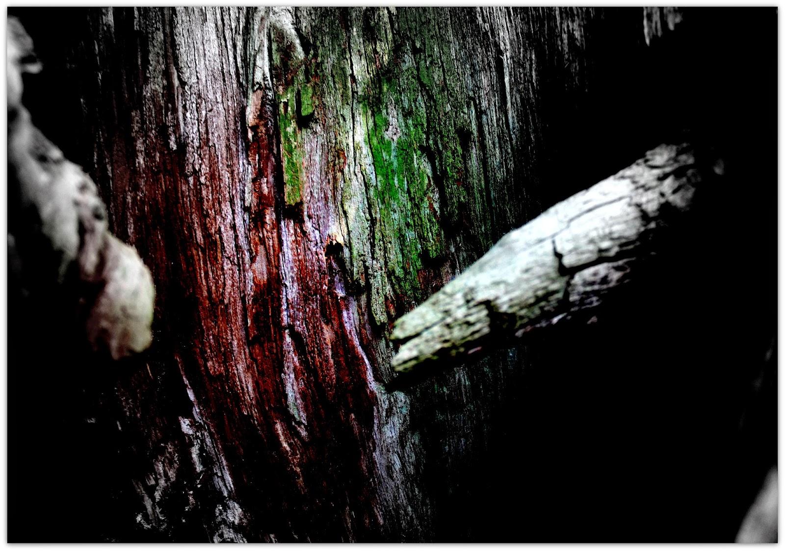 Svartbygget  Jag måste få vara träd nu 2e9f312851510