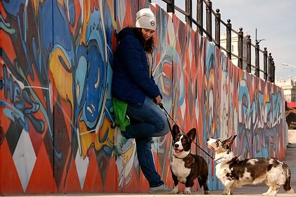 pies w podróży, podróże z psem, podróżowanie z psem, cardimania, cardigan, welsh corgi, welsh corgi cardigan, stare miasto, starówka, biba, yuma, spacer, bulwary, bulwary nad wisłą, wisła