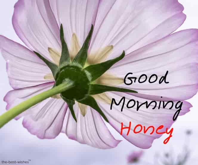 good morning honey beautifull images