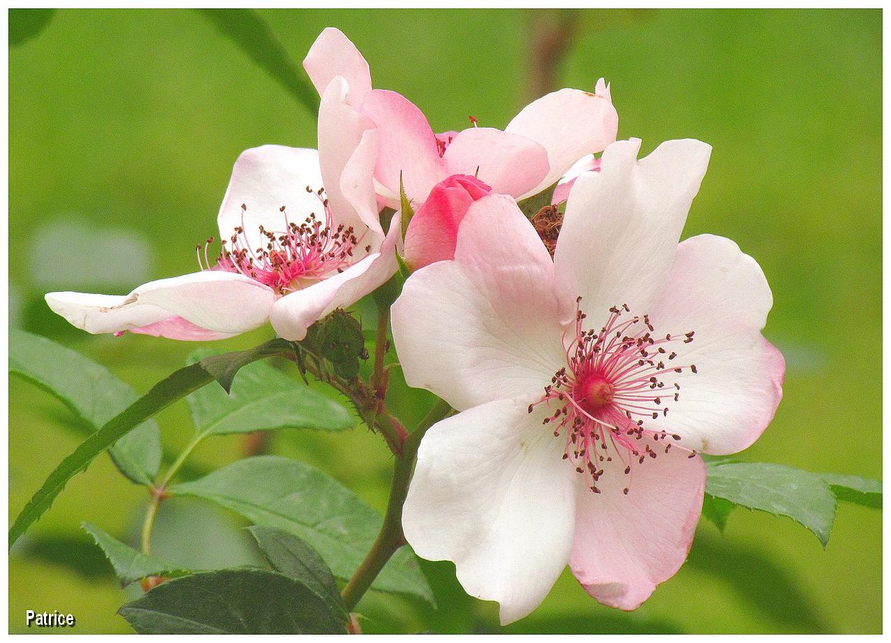 Super Blog Photos de Patrice: Fleurs jardin des plantes PN43