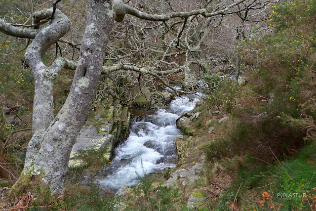 Río Porcía - Asturias