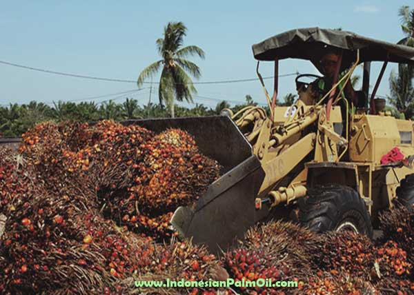 ffb production of palm oil