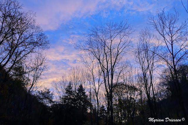 paysage de forêt à l'aube du premier décembre
