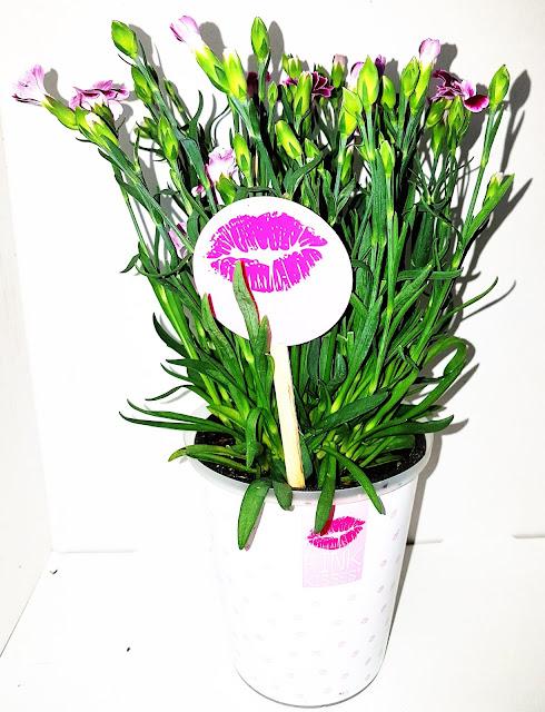 pink kisses lebende geschenkideen. Black Bedroom Furniture Sets. Home Design Ideas