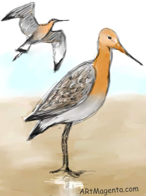 Black-tailed godwit is a bird painting by artist and illustrator Artmagenta