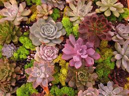 Succulent di Terrarium Jakarta Indonsia