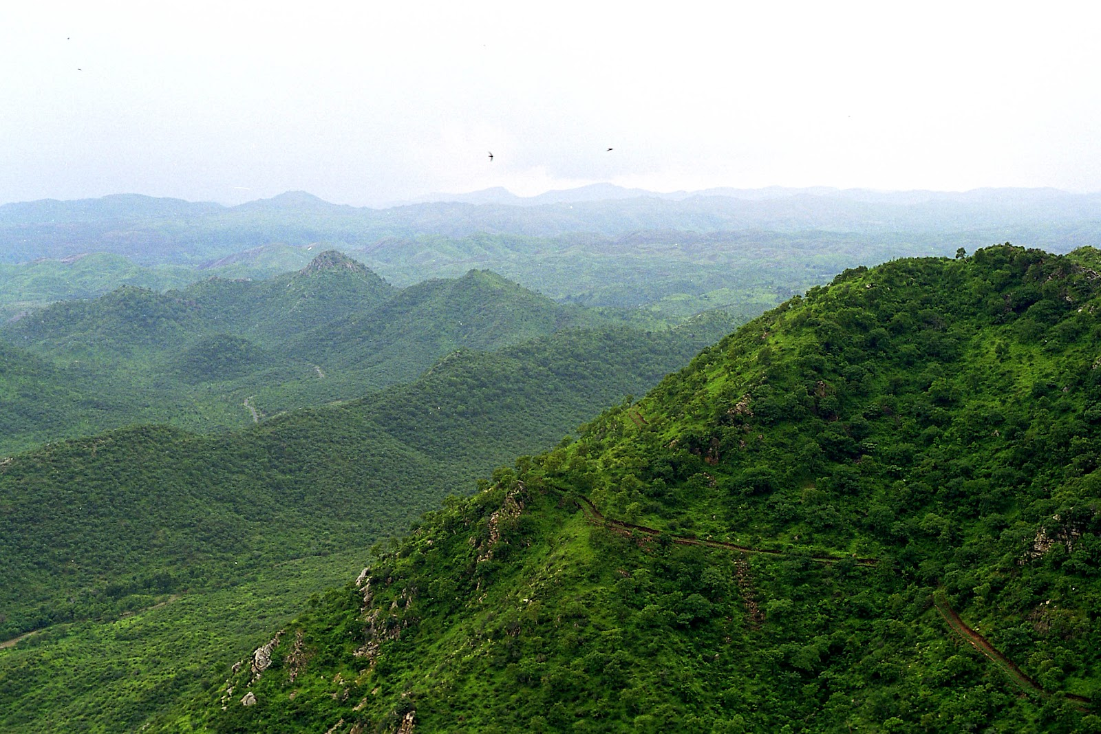 biodiversity in seshachalam hills B r hills is one of the best places to go for wildlife tour in south  for seeing the  alpine biodiversity and shola-grassland ecosystem  the park is spread in an  area of 35362 sq km over the seshachalam hills of cuddapah.