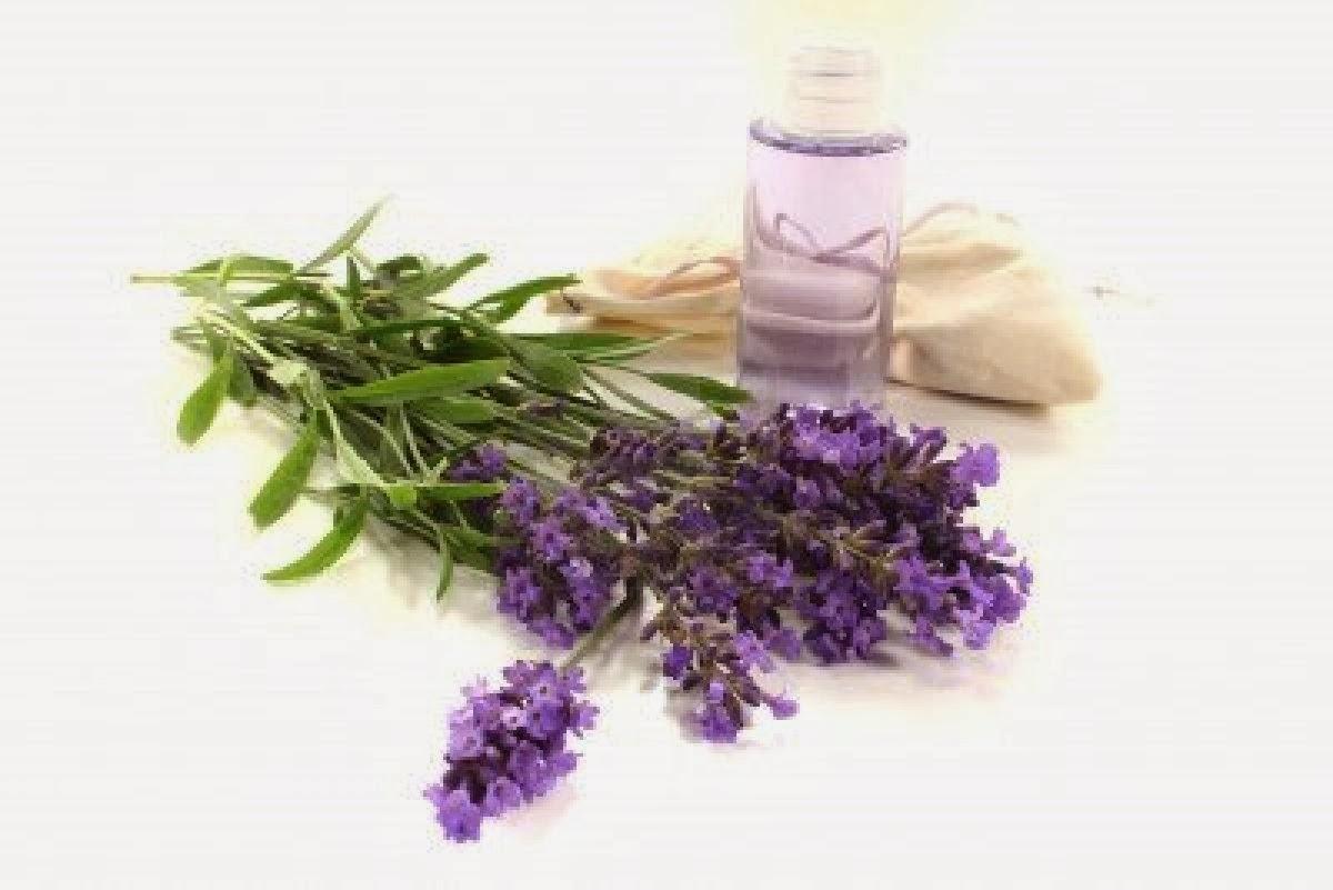 lavender oil for skin - photo #35