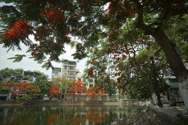 Hanoi in young leaf season 7