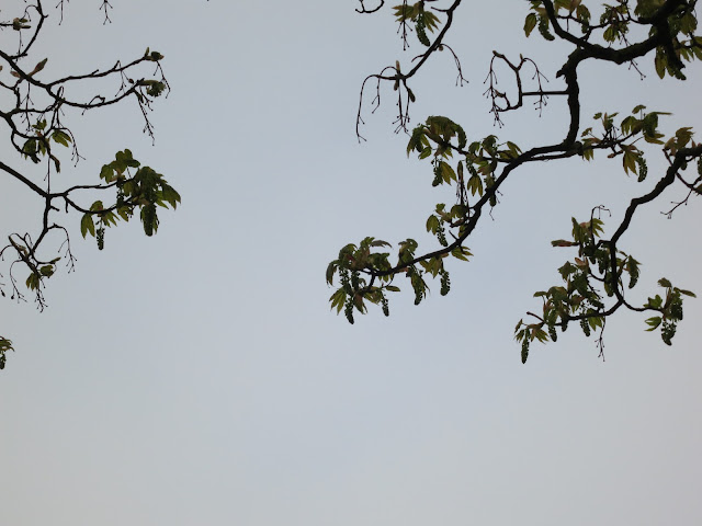 Leaves and branches against grey, misty sky.