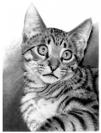[Resim: beautiful_pencil_drawings_pics_22.jpg]