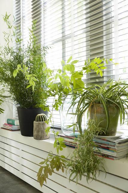 Cantinho verde ideias para ter plantas dentro de casa for Plantas para dentro de casa sombra