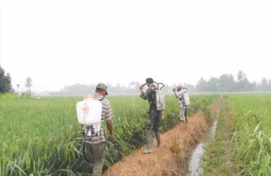 """Bersama Kelompok Tani """"Sri Mula"""", Aanggota Babinsa ini Lakukan Penyemprotan Hama di Desa Sugiharjo"""
