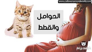 رؤية القطط في المنام للحامل تفسيرها و أسبابها بالتفصيل