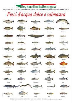 Il bilancionato misure minime del pesce pescato for Pesce pulitore acqua dolce