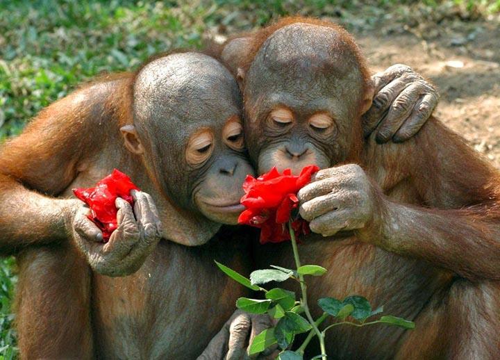vahşi hayvanlar çiçek koklarken fotoğraflanmış