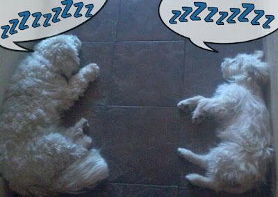 Buffy and Fluffy sleeping