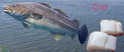 cod fish, cod
