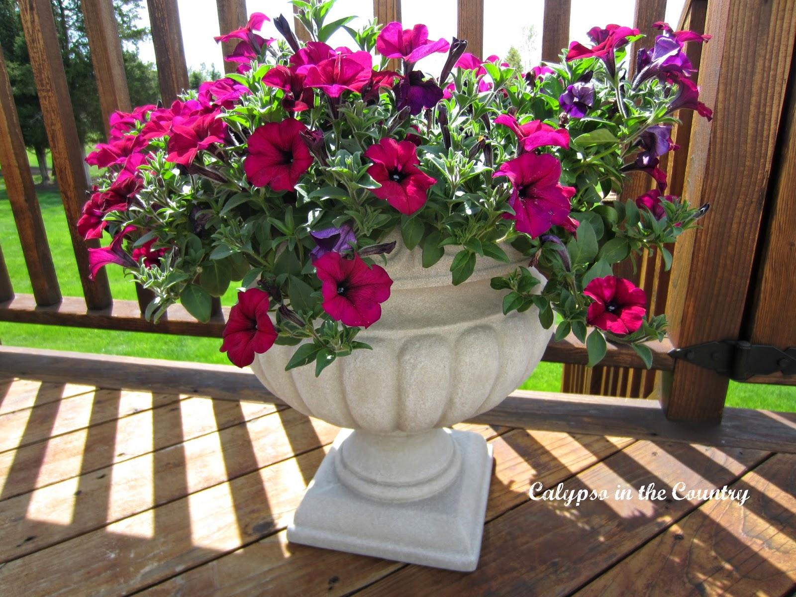 Pink Petunias in Urn