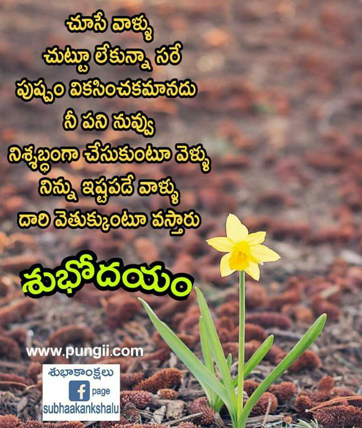 Good Morning Quotes In Telugu Pungii