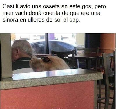 Casi li avío uns ossets an este gos, pero men vach doná cuenta de que ere una siñora en ulleres de sol al cap.