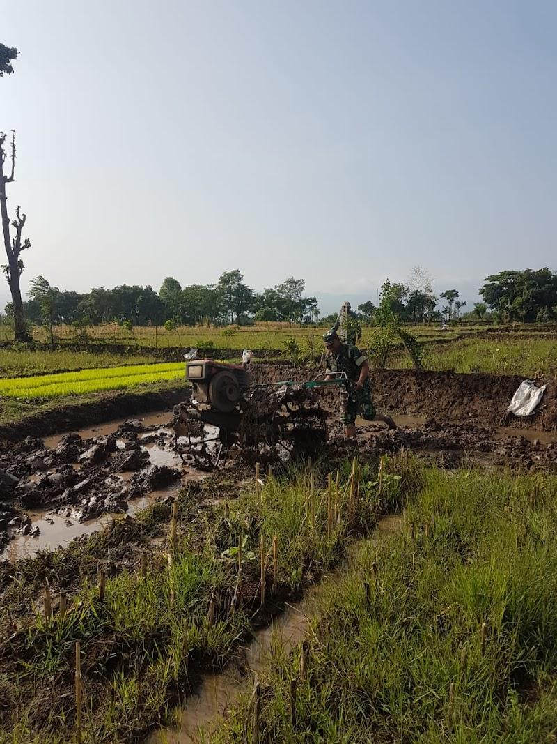 Babinsa Sambisirah Dampingi Petani Dalam Penyiapan Lahan