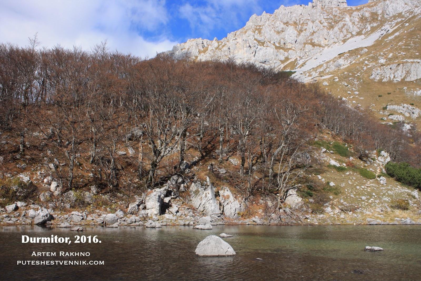 Лес на берегу озера Скрчка