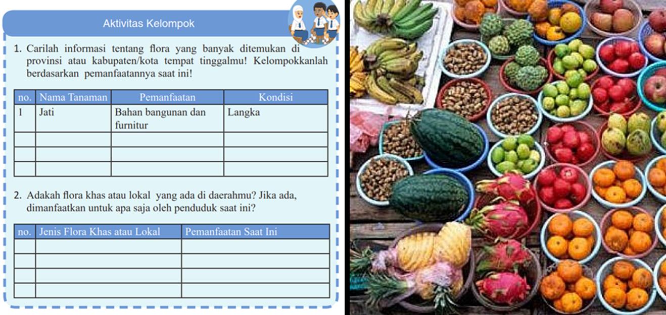 Mengerjakan Pr Informasi Tentang Flora Yang Ditemukan Di Provinsi Atau Kabupaten Kota