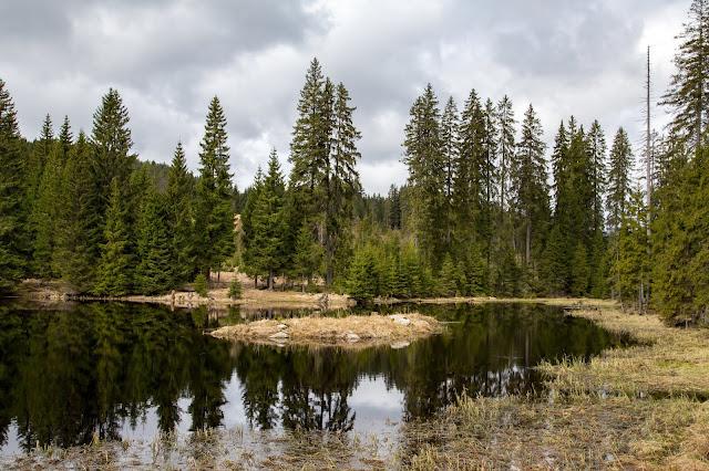 Auf vergessenen Wegen von Finsterau nach Buchwald  Wandern im Bayerischen Wald  Wanderung Nationalpark Bayerischer Wald 01