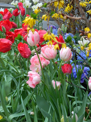 Parrot tulips at the Centennial Park Conservatory Easter Flower Show by garden muses-not another Toronto gardening blog