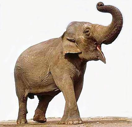 An Elephant a Day: Elephant No. 317: Pencil Drawing