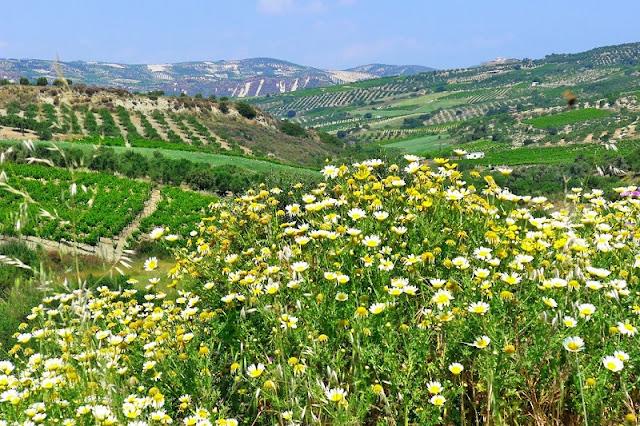 Primavera em Creta