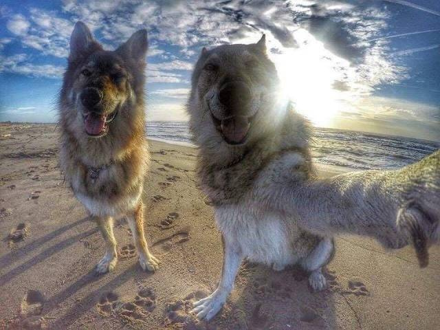 Cute dogs - part 264, cute dogs, funny dog photo, dog picture