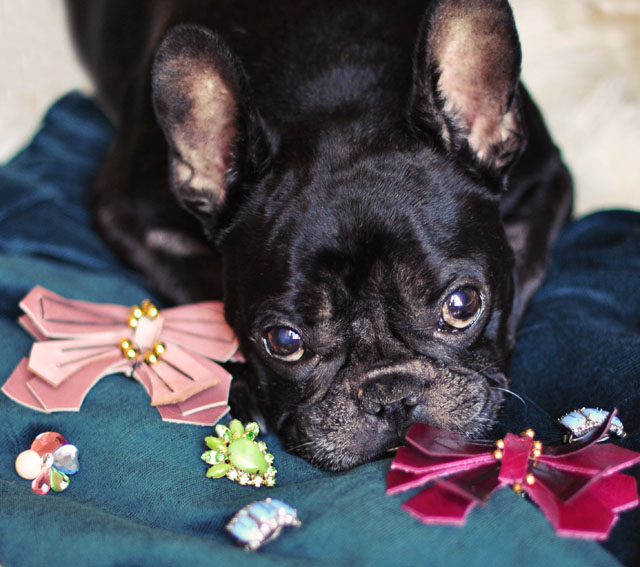 DIY Leather Butterfly Pin inspired by Lanvin, French Bulldog