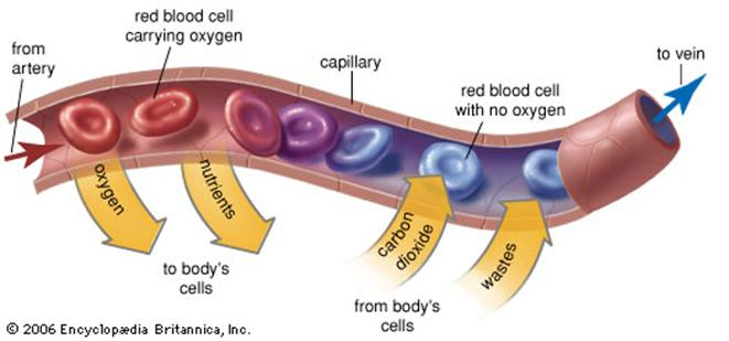IB Biology at Chapel School : 7. State that the following ...