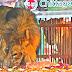 சிங்கங்களுக்கு நடந்த வினோத திருமணம் !!