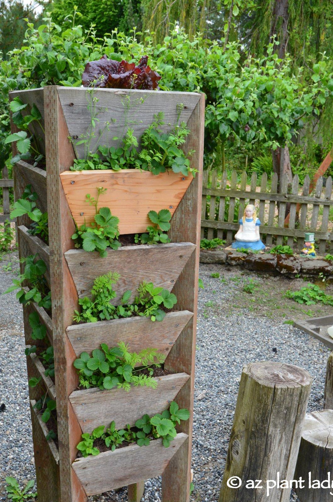 Themed Gardens: Children's, Enabling, Native & Vegetable ...