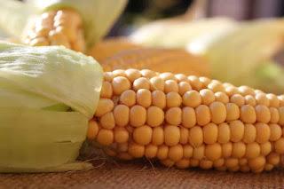 manfaat-air-rebusan-jagung-untuk-ibu-hamil