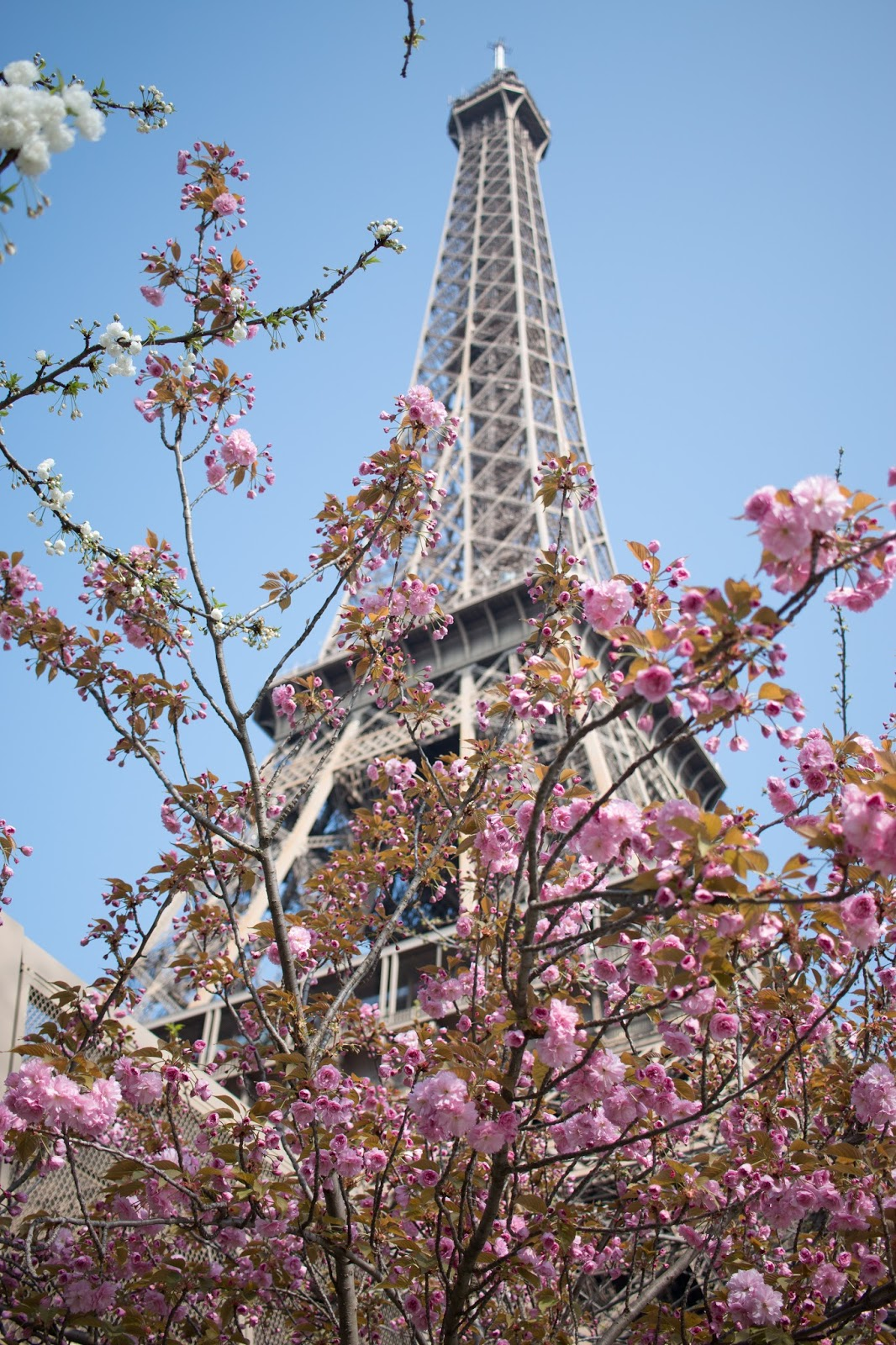 Travel: Visiting Paris in spring